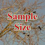 Sample Size 150x150 - hồi quy lsdv Least square dummy variable regression