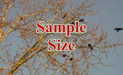 Sample Size 400x245 - ước tính cỡ mẫu cho hồi quy